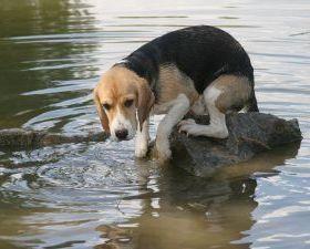 dogfearofwater